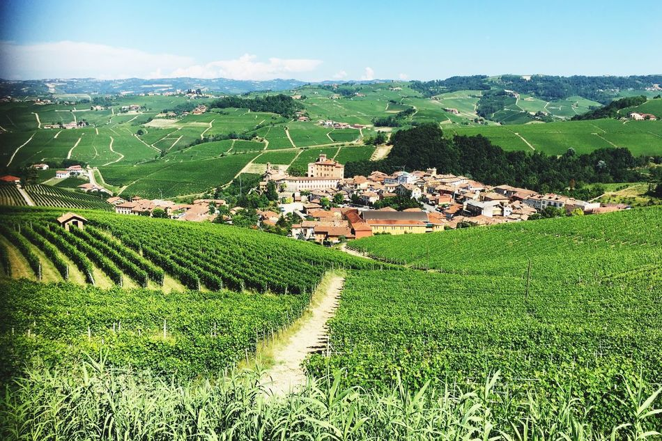 Italy🇮🇹 Sky And Clouds Nature 43 Golden Moments, Taking You On My Journey 😎 View Over Barolo Wineyards EyeEm Gallery No People Nature EyeEm Best Edits On The Way Wine Tasting Travel Photography Barolo Wineyards Barolo City