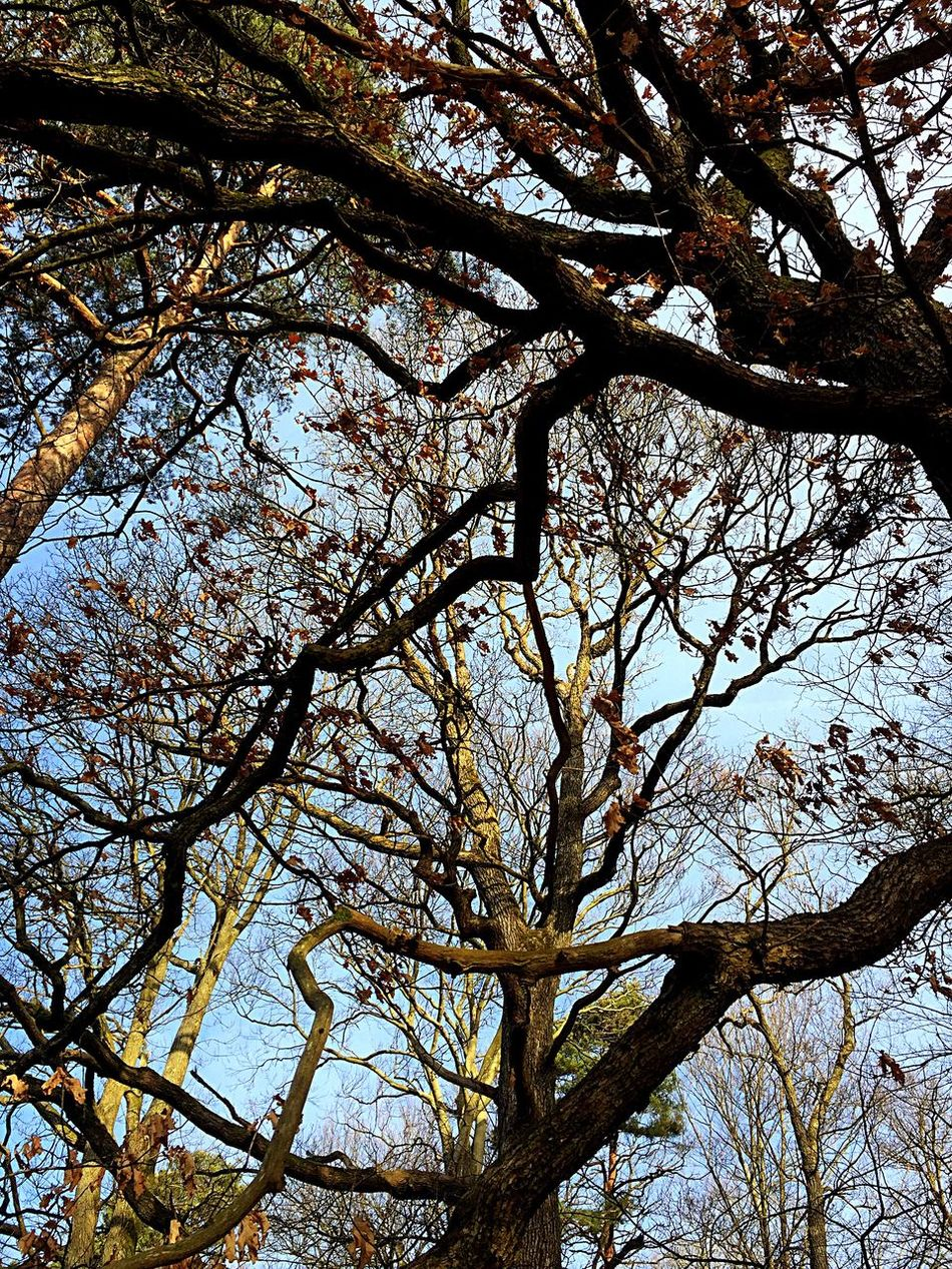Tree Trees Sky Nature Beauty In Nature Outdoors March 2017 Outside Photography Iphonephotography Sweden Showcase March IPhoneography Lookingup Nice Day Outside Nature Nature Photography Trees And Sky Tree And Sky Clear Sky