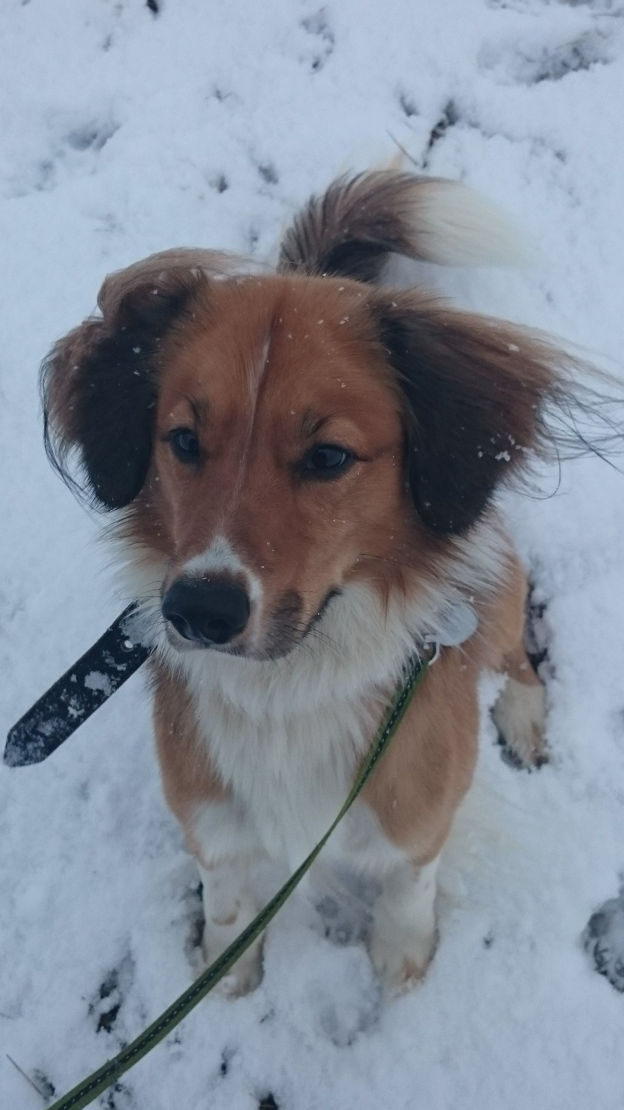 Dog Salaspils Salaspils Latvia Riga Snow Winter собака зима рига саласпилс снег
