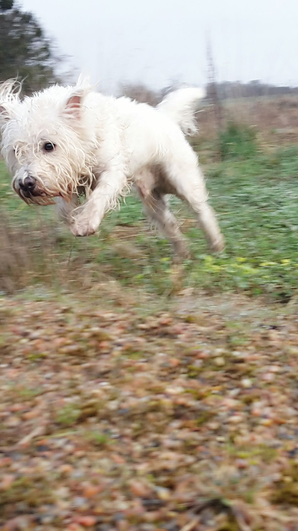 One Animal Domestic Animals Water Animal Themes Dog Pets No People Outdoors Day Close-up Nature Samsungphotography Hobby Photography Running Dog