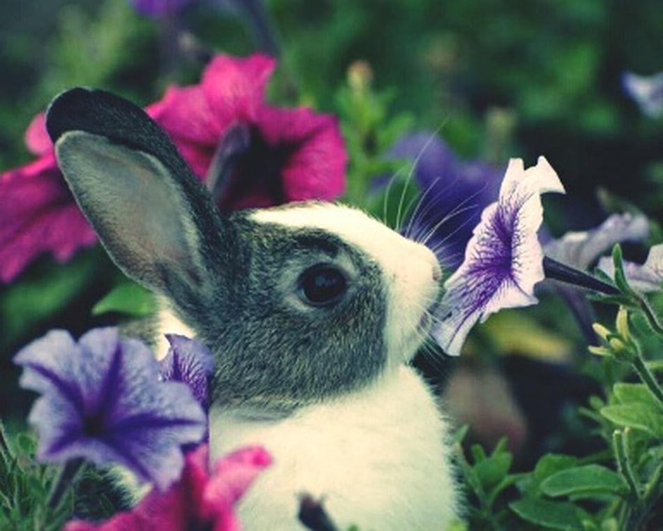 Süßi❤️ Süßi :* Süß *__* Hasen Häschen Hasi Hasi♥ BabyPet Tiere Winzig Klassiker