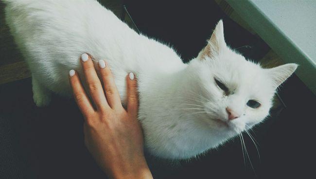 Моя девочка 🐱❤ Relaxing Cat My Cats Home Україна Киев Kiev Kievblog Ukraine Cute