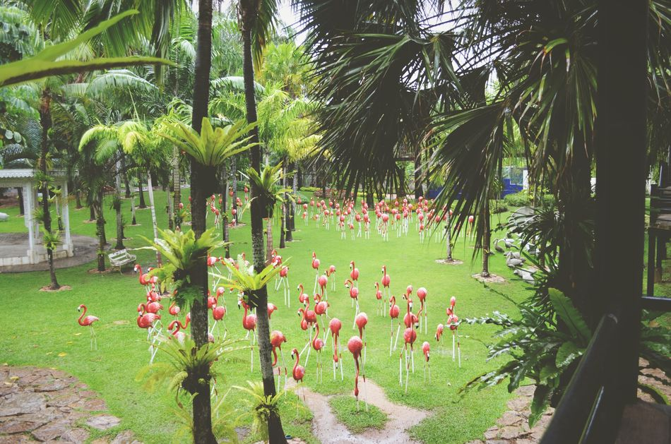 Thailand Travel Nature Flower Green Color Plant Beauty In Nature Tree Palm Tree No People Botanical Garden Monument Flamingo Pataya Travel Destinations Architecture Vacations Foggy Morning