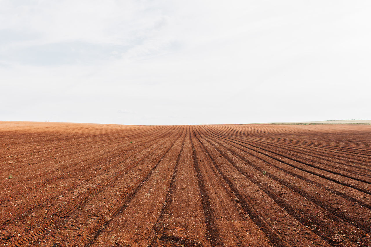 Agricultural Land Agriculture Agriculture Brown Cereal Cereal Plant Day Farm Farm Growth Harvest Land Landscape Nature No People Outdoors Pattern Patterns Patterns In Nature Plowed Field Rural Scene Seed Seeds Wheat