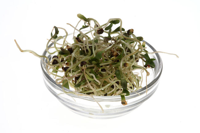 fresh sprouts, seedlings from the hemp seeds, hemp nuts Food Freshness Green Color Growth Hemp Medicinal Plant No People Nuts♥ Plant Seed Seedlings Sprouts White Background
