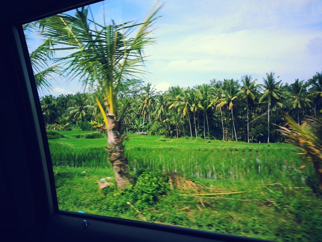 India Travel Destinations Vacations EyeEmNewHere Low Angle View Check This Out Trees Farms Taken From Moving Vehicle Taken From Smartphone Camera Outdoors No People Beauty In Nature