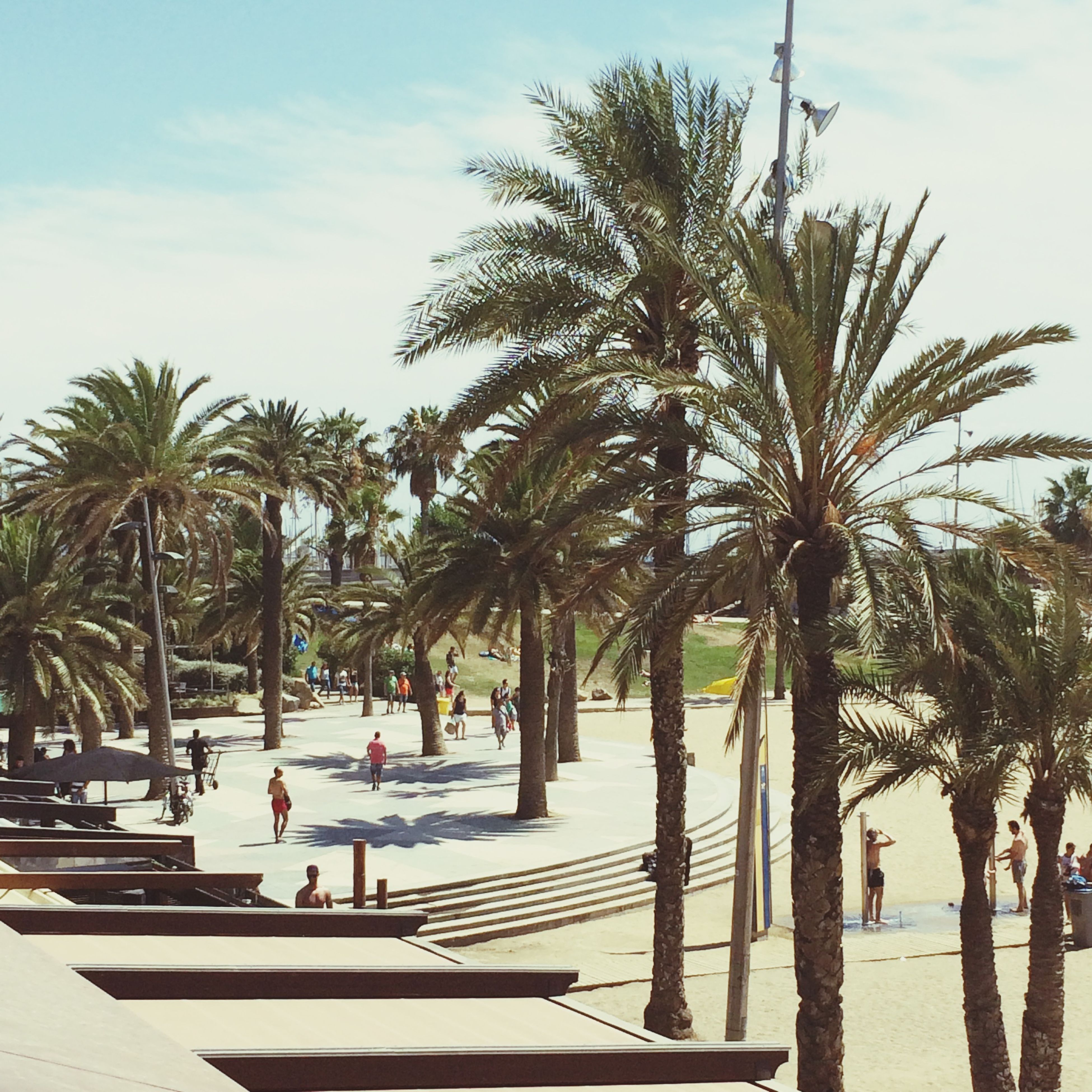 palm tree, tree, beach, sky, sea, leisure activity, lifestyles, water, vacations, men, person, growth, nature, shore, sand, sunlight, incidental people, coconut palm tree, tree trunk