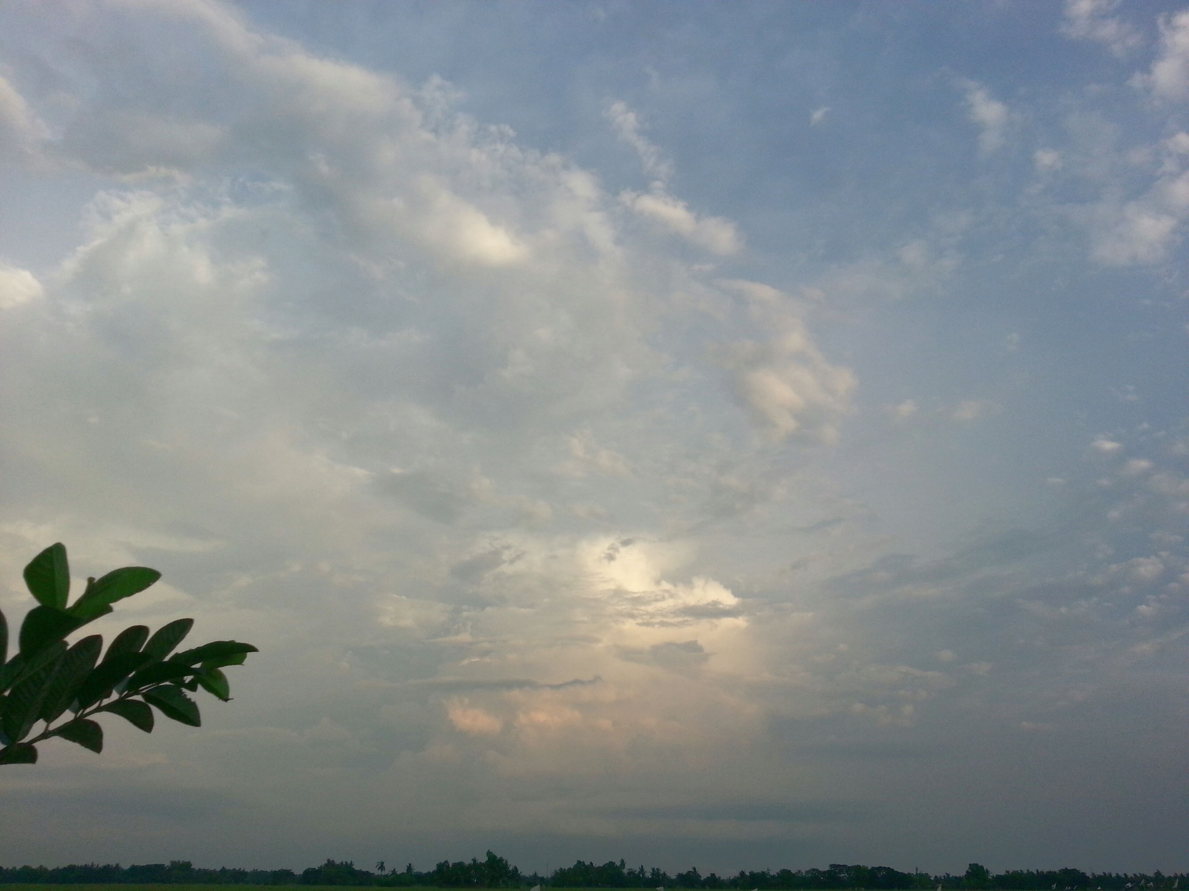 sky, tranquility, tranquil scene, cloud - sky, beauty in nature, scenics, tree, silhouette, nature, cloudy, low angle view, cloud, idyllic, growth, sunset, outdoors, weather, no people, landscape, overcast