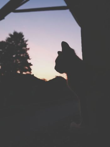 Cat twilight Silhouette Sunset Animal One Animal Pets Domestic Animals No People Mammal Outdoors Sky Animal Themes Day Close-up Whisker Feline