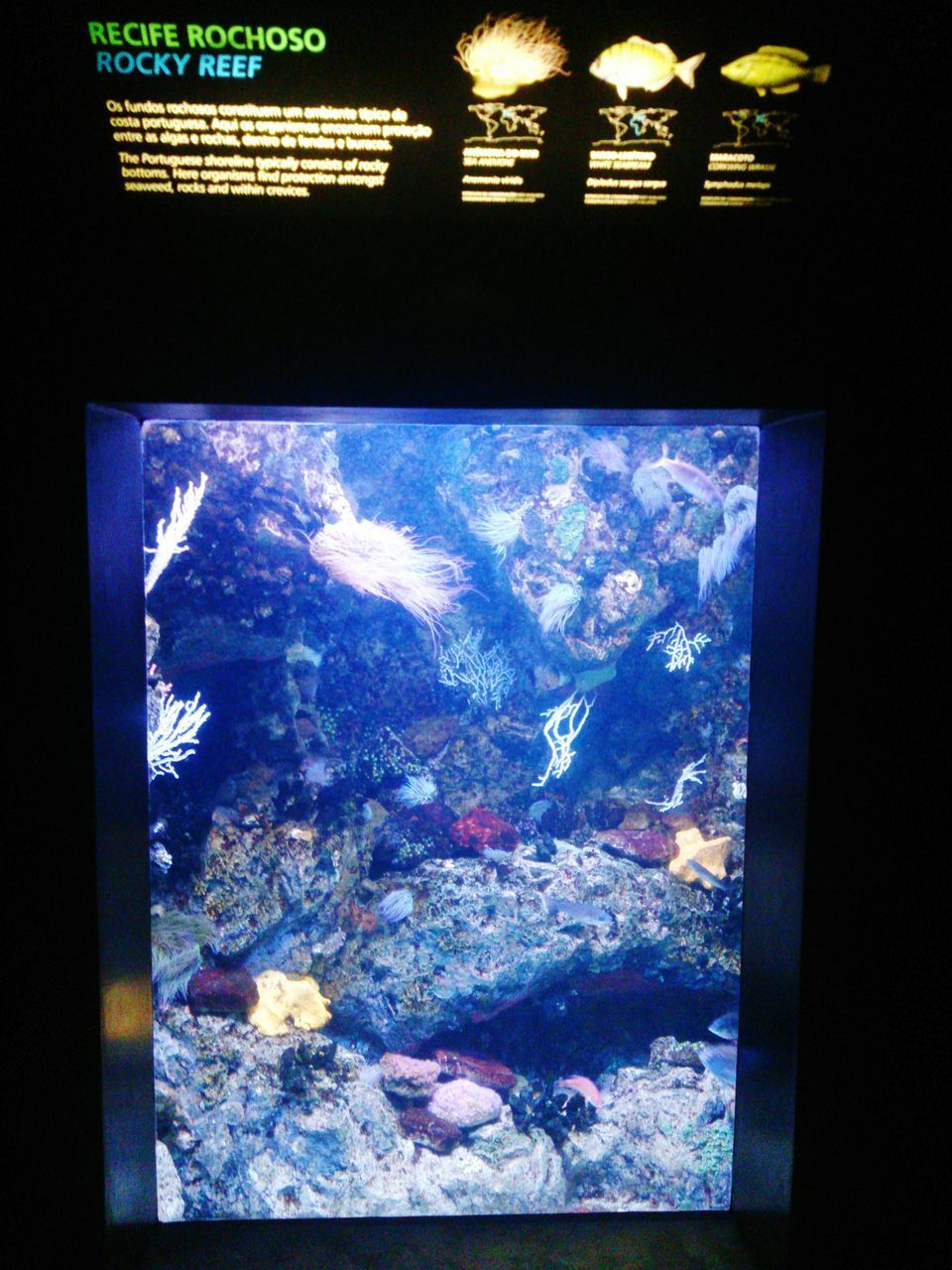 indoors, aquarium, arts culture and entertainment, underwater, no people, close-up, nature, sea life, animal themes, day