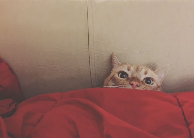 Cat Cats Cat♡ Cat Lovers Catoftheday Cats Of EyeEm Caturday Catlovers Cats 🐱 Catlover Peek! Pets uCute Cats uCute Animals rOrange Tabby rOrange Cat oCozy ePeekaboo ePeeking rTroublemaker iMischievous