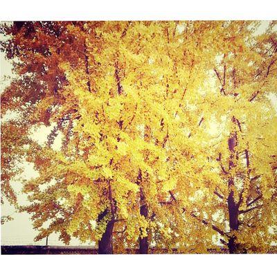 Autumn ??bb 注意身体? First Eyeem Photo