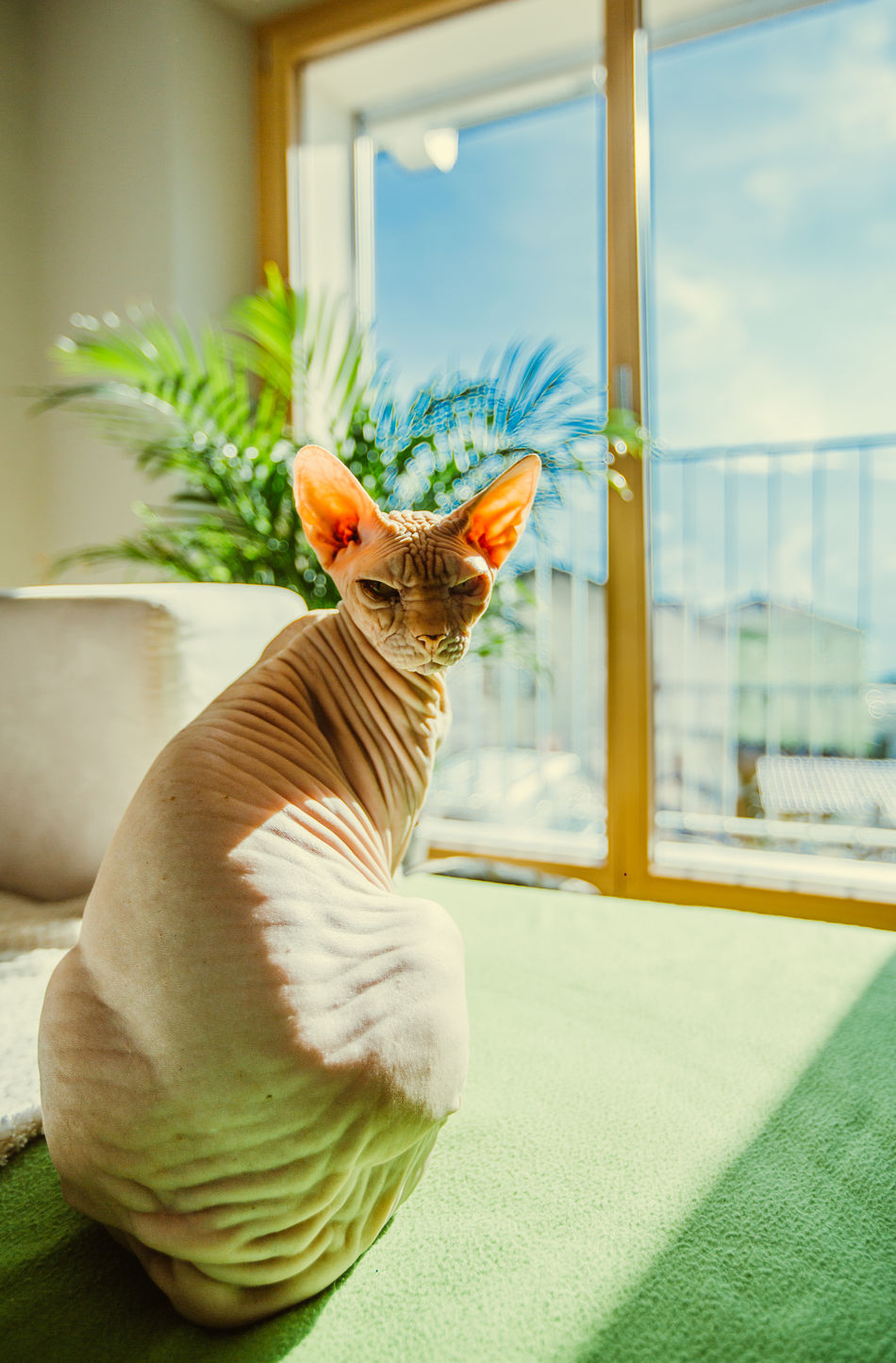Window Domestic Cat One Animal Window Sill Pets Domestic Animals Cateyes Cat Lovers Cat Watching Cat Eyes Cat Photography Catlovers Catsagram Cats 🐱 Cat♡ Cat Cats Of EyeEm Day Portrait Close-up No People Animal Themes Looking At Camera Animals In The Wild Animal