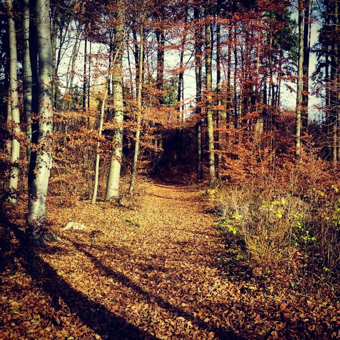 #wandern #herbst #november #2012 Wandern Herbst November 2012