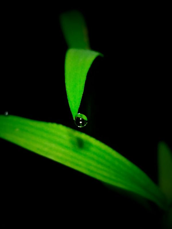 Dew Dew Drops Dewdrops_Beauty Dew Drops On Leaf Nature Nature In The Night Taking Photos Macro_collection Selective Focus Plant Photography Nature Photography Beauty In Nature Leafs Photography Green Leafs Light In The Darkness Leafs 🍃