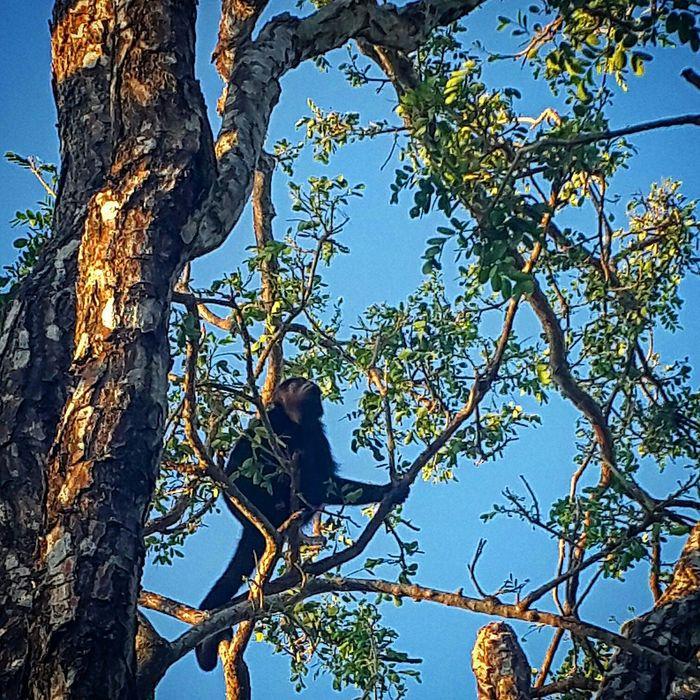 Determination Leap In The Jungle Costa Rica Nature Photography Costa Rica Y Su Naturaleza Descubrecostarica Beauty In Nature Nature Dryseason Guanacaste