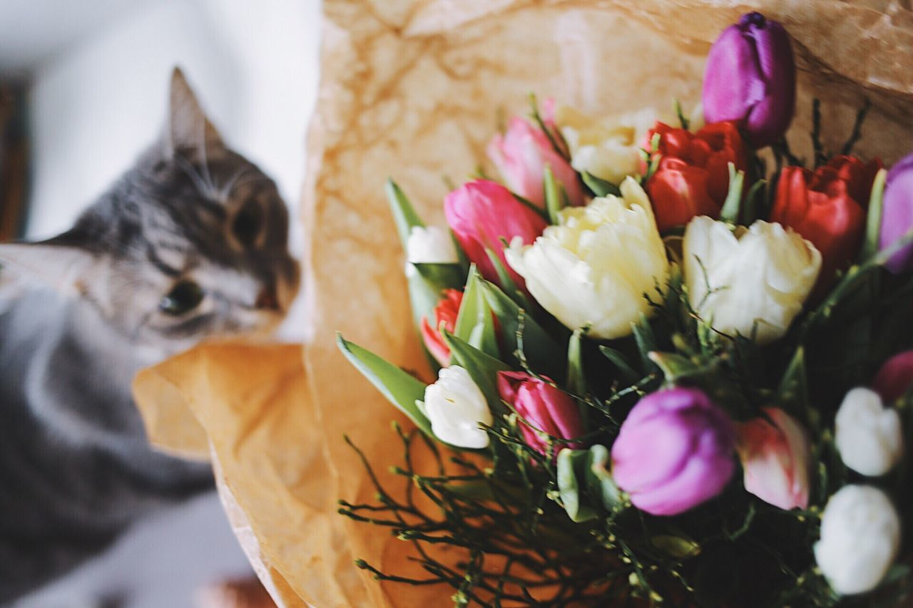 Flower Domestic Cat Indoors  Domestic Animals Pets Mammal No People Nature Freshness Feline Close-up Animal Themes Day Cute Pets Funny Faces Flower Collection Bouquet Of Flowers Tulip Spring Flowers Flower Head Freshness One Animal Indoors  Bunch Of Flowers Beauty
