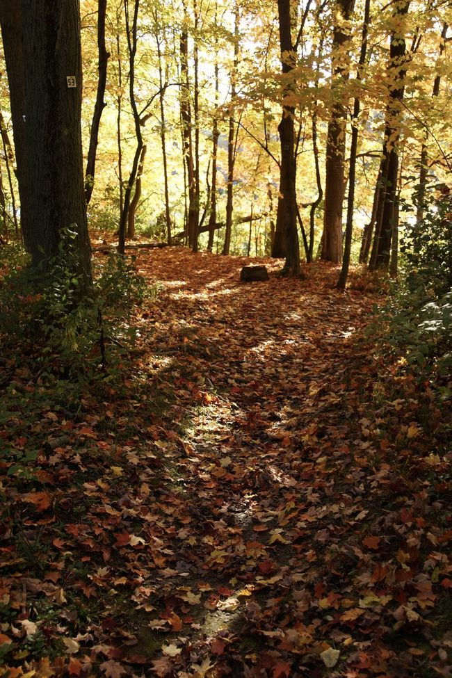 Filtered sunlight on my hike through the woods. Great way to end the work day. Autumn Autumn Beauty In Nature Change Day EyeEm Nature Lover Fall Fall Colors Fall Leaves Footpath Growth Landscape Nature No People Outdoors Remote Scenics Silence Solitude Tranquility Tree Wisconsin