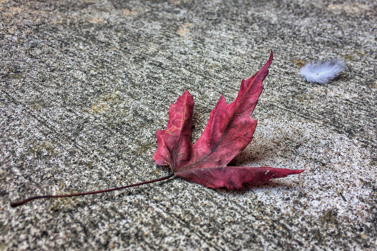 One Red Leaf Beauty In Nature Minimalism Minimalist EyeEm Nature Lover Feather  Found Object