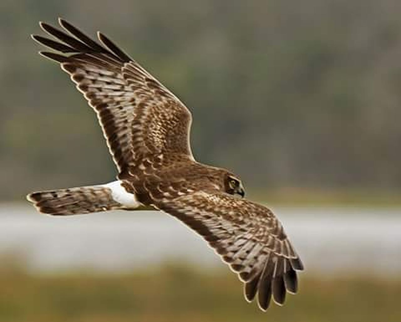 bird, flying, animal wildlife, one animal, spread wings, bird of prey, animals in the wild, mid-air, nature, hawk - bird, focus on foreground, day, no people, falcon - bird, outdoors, owl, animal themes, beauty in nature, full length, close-up