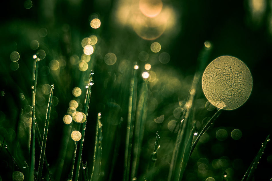 Abstract Beauty In Nature Blade Of Grass Bokeh Bokeh Bubbles Close-up Day Freshness Grass Green Color Growth Nature No People Outdoors Plant