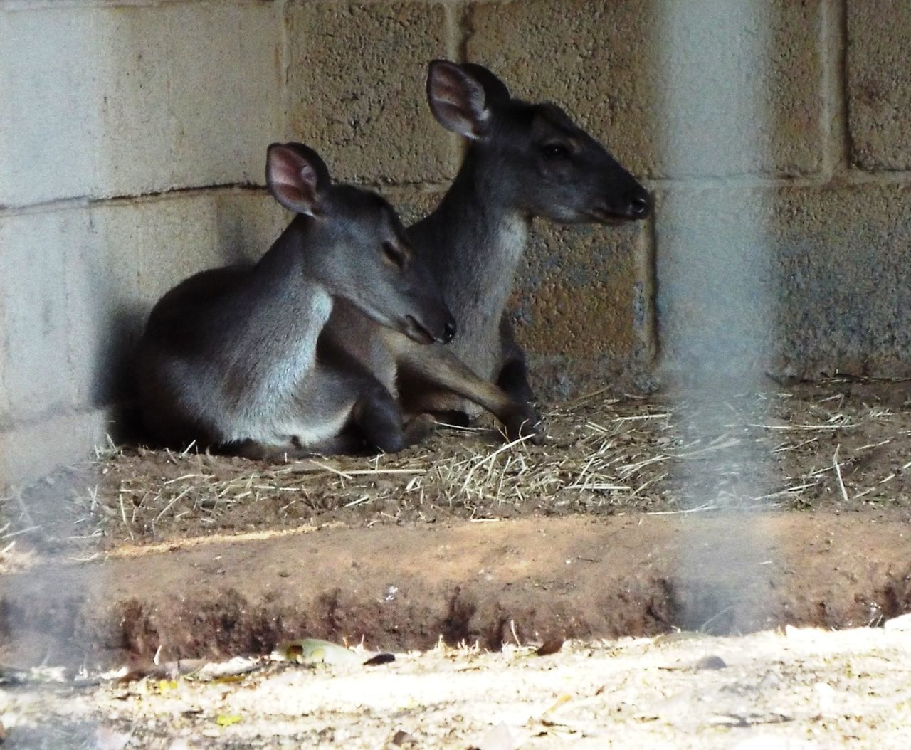 mammal, animal themes, no people, day, domestic animals, outdoors, nature