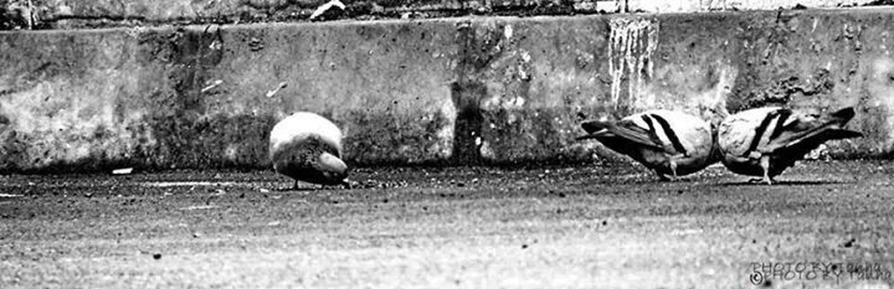 Telling Stories Differently Showing Imperfection Love Close Up Street Photography Alone Missing You Miss A Separation Separation Lonley Looking To The Other Side Why Alone Time Alone PiX Hello World That's Me Blackandwhite Photography Truelove Blackandwhite Black And White Black & White Milad Tanha Hanging Out Check This Out