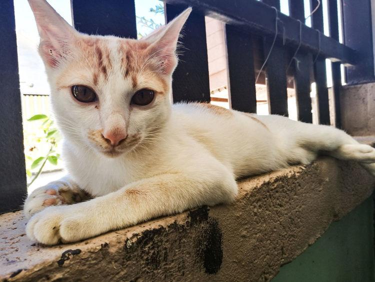 Cat Cats Cat♡ Cat Lovers Cats 🐱 Cat Eyes Animal Animals Pets Cat Thailand :) Cat Thai