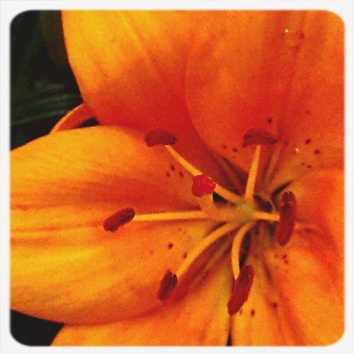 Leone Filter  Colors Flowers EyeEm Best Shots