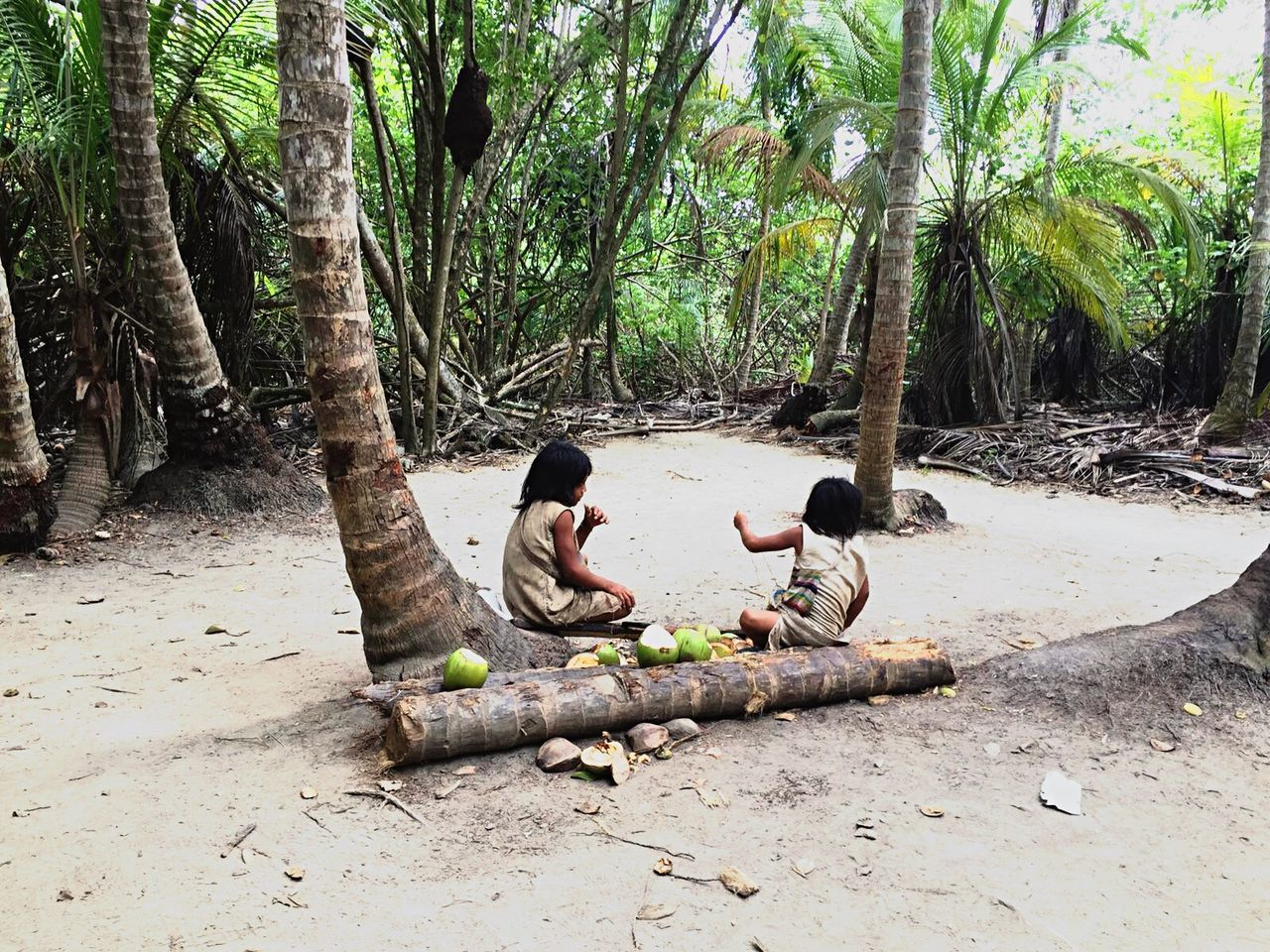 Colombia Tayrona Natural Park Tree Indians  Coconut Nature Sitting Travel Forest Tranquil Scene Vacations