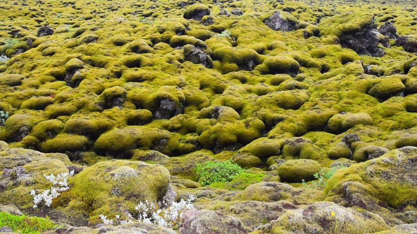Nature Water Beauty In Nature Day Rocky Green Color Full Frame Scenics Non-urban Scene Tranquility Rock Abundance Outdoors Rock Formation Tranquil Scene Flowing No People Sea Lush Foliage Lava Field Iceland