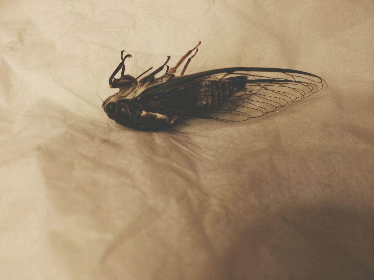 Beautiful stock photos of death, Animal Themes, Close-Up, Dead, Dead Animal
