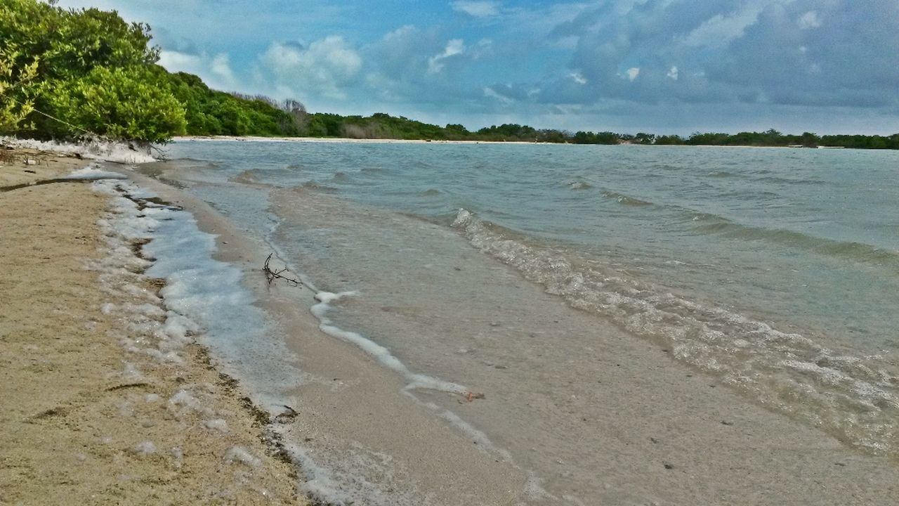 beach, sea, sand, water, shore, nature, sky, beauty in nature, tranquility, tranquil scene, scenics, day, no people, outdoors, wave, tree