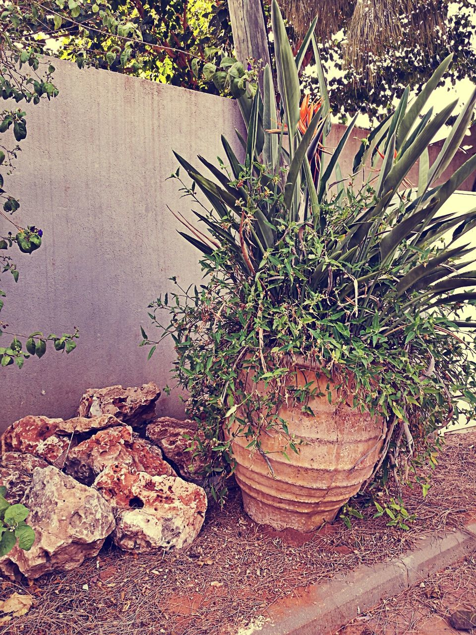 growth, plant, potted plant, no people, nature, day, outdoors
