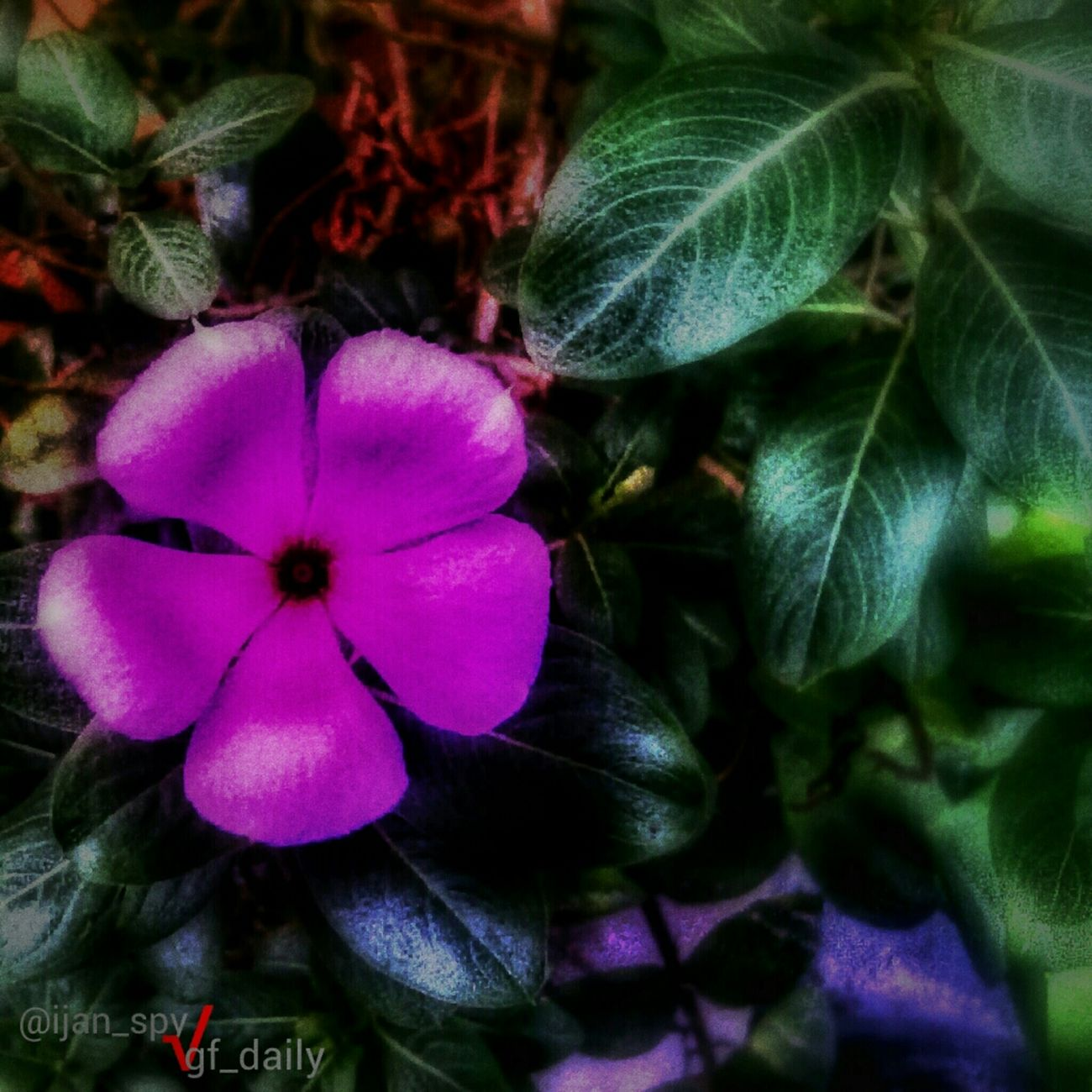 Pink flower Entry for : #gf_daily_flower_013 #floralstyles_gf #gang_family #gf_daily #gf_brothas #gf_indonesia