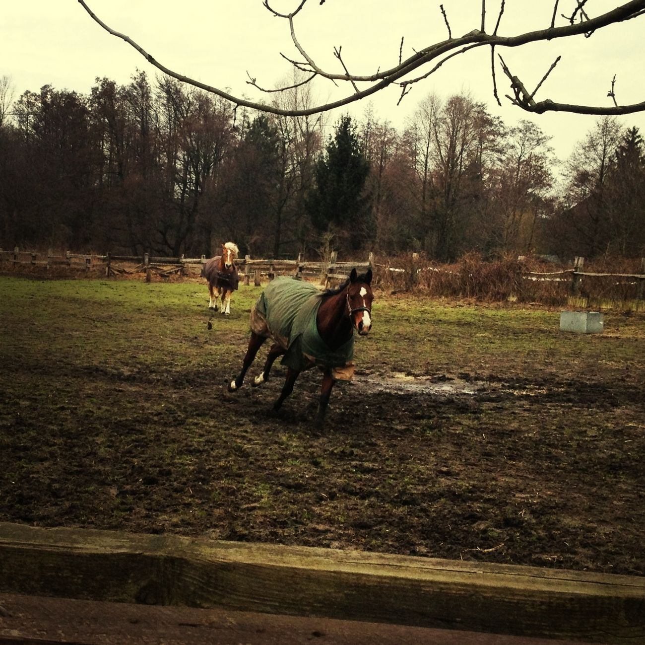 Galopp Taking Photos Horses Galopp Dynamic