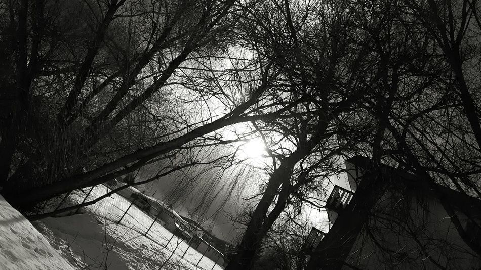 You can fond complete beauty in the simplest times and in the simplest things, it just takes the right eye. Tree Low Angle View Nature Sky Beauty In Nature Branch Day Sun Sunny Blackandwhite Photography Trees Playground Fence Chainlink Weeping Willow Weeping Sorrow Beauty Britishcolumbia Beautifulbritishcolumbia Winter Snow White Contrast