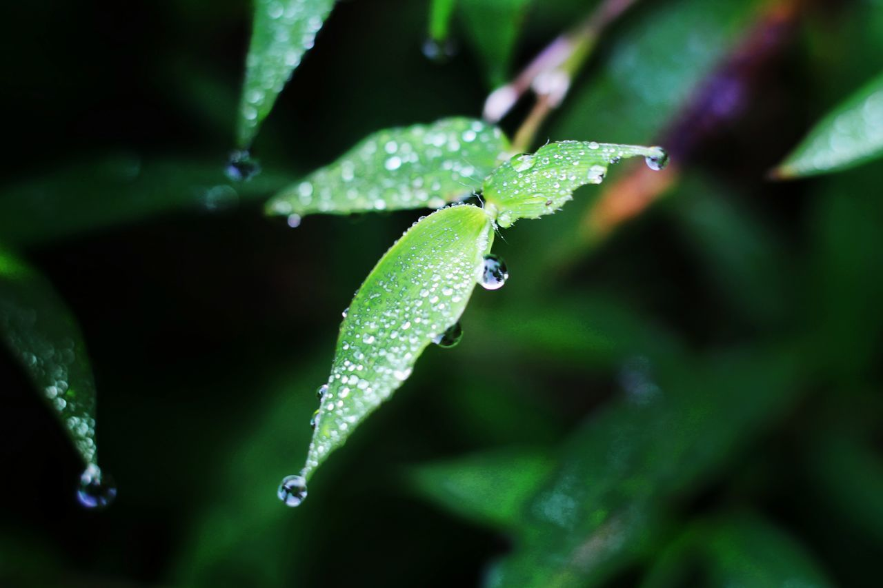 Green Color Drop Leaf Nature Close-up Plant Water Beauty In Nature Outdoors Freshness Morning Dews Eyeem Philippines