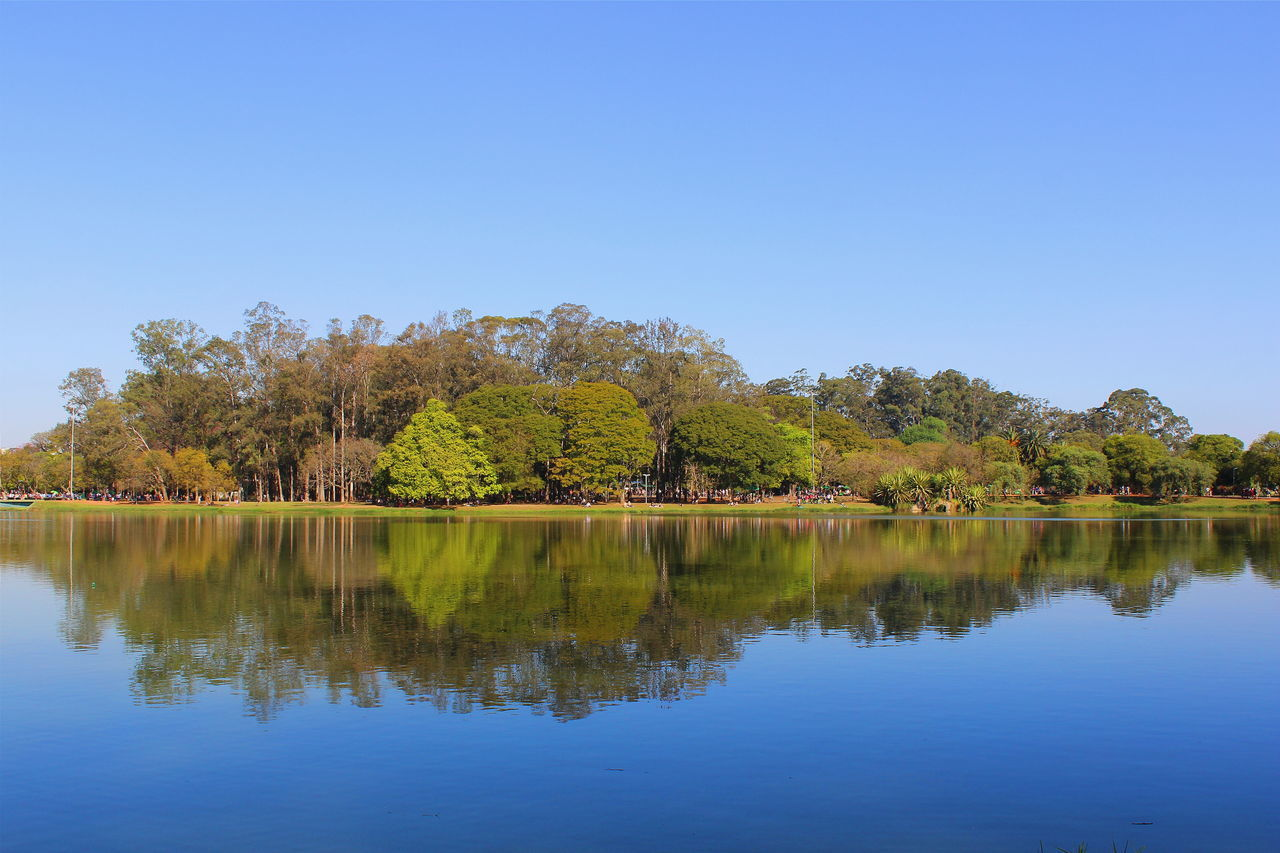 reflection, tree, lake, water, nature, tranquil scene, beauty in nature, scenics, clear sky, tranquility, waterfront, autumn, outdoors, no people, day, blue, sky