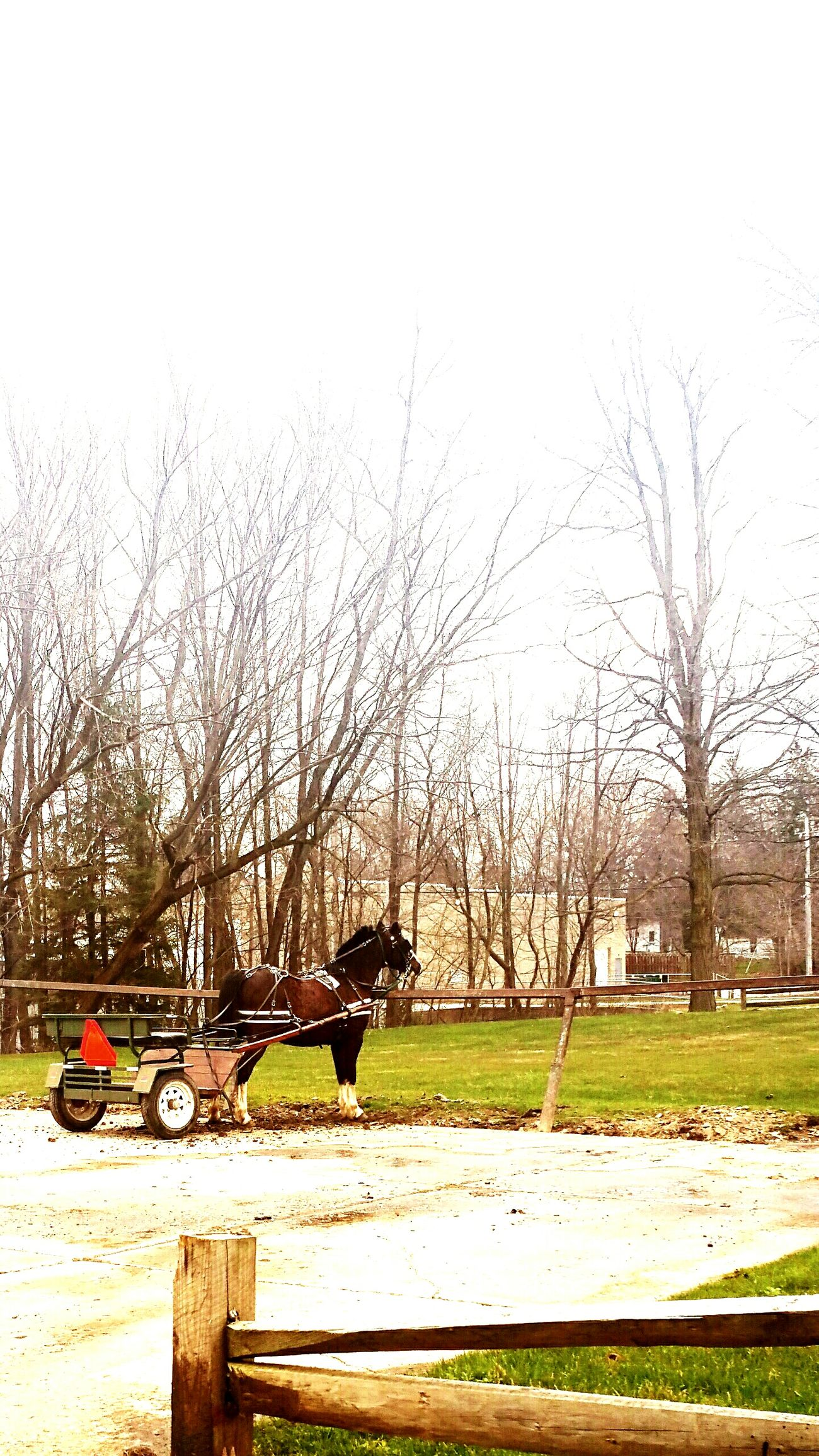 Working Animal Working Horse Amish Amish Country My Town My World... Little Pony Little Wagon Enjoying Life Lovemytown