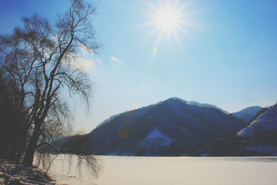 Sky Sunlight Sun Nature No People Water Outdoors Sunbeam Day Close-up Tree Beauty In Nature Snow Nami Island Trees Korea Nami Island , Korea Snow Time Tranquility Trees And Nature Beauty In Nature Clear Sky Winter Lake Ice Lake