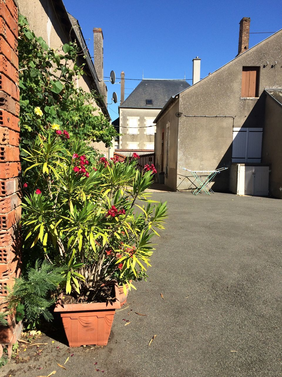 architecture, building exterior, plant, built structure, house, growth, outdoors, day, nature, no people, flower