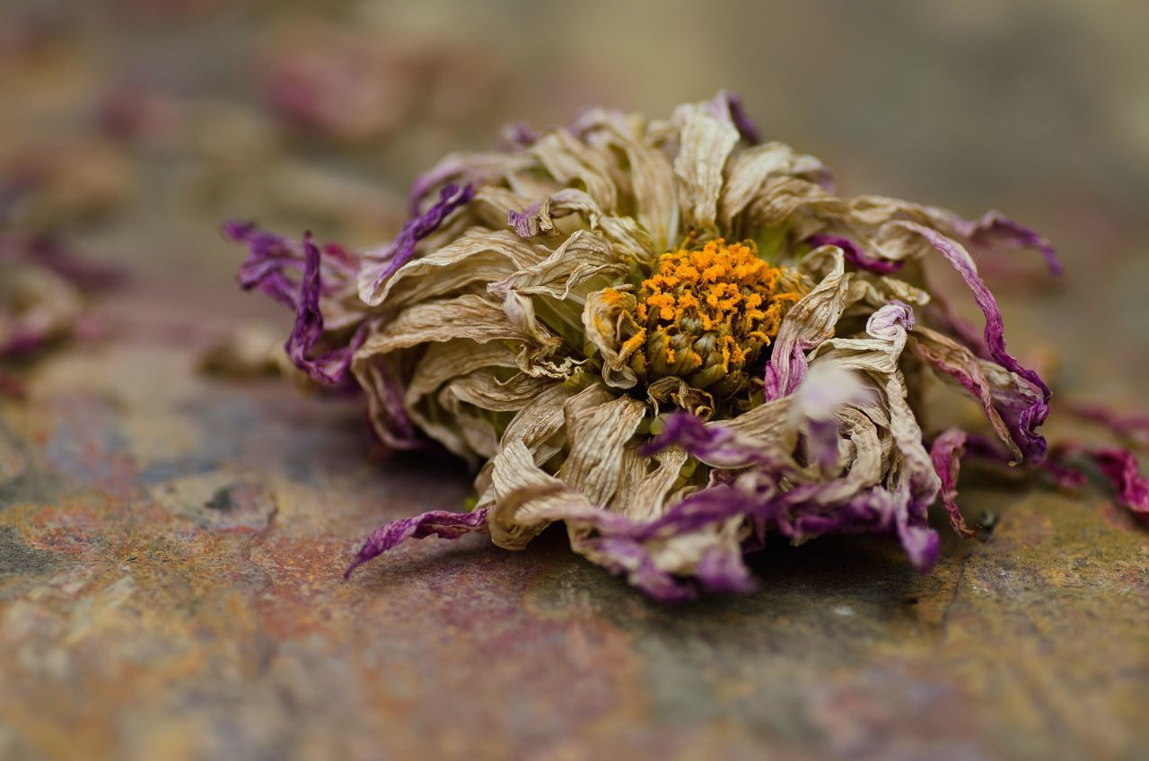 Beautiful stock photos of death, Botany, Close-Up, Dead, Dry
