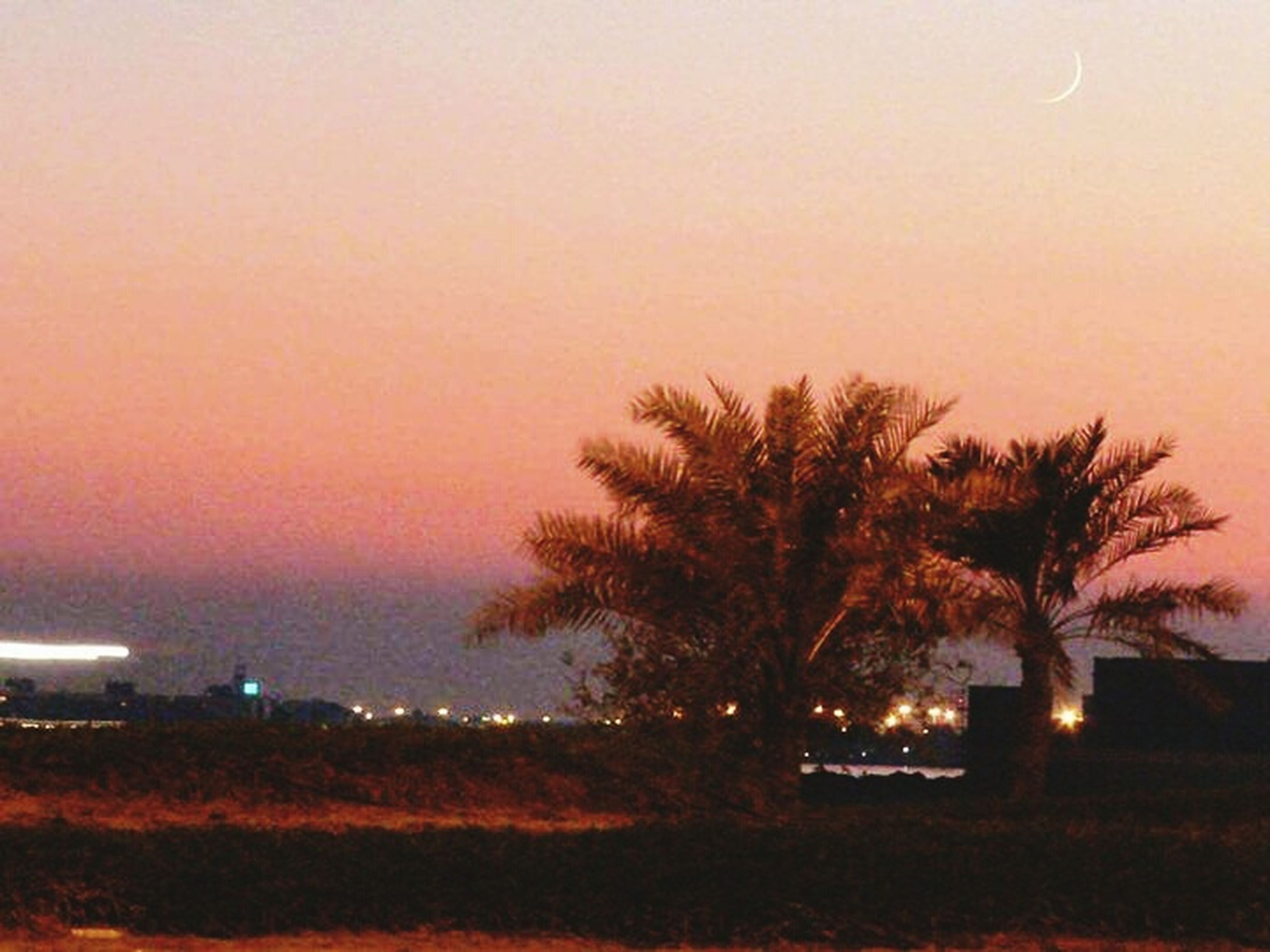 sunset, tree, palm tree, silhouette, clear sky, copy space, tranquil scene, tranquility, scenics, nature, beauty in nature, sky, growth, dusk, orange color, outdoors, illuminated, idyllic, no people, landscape