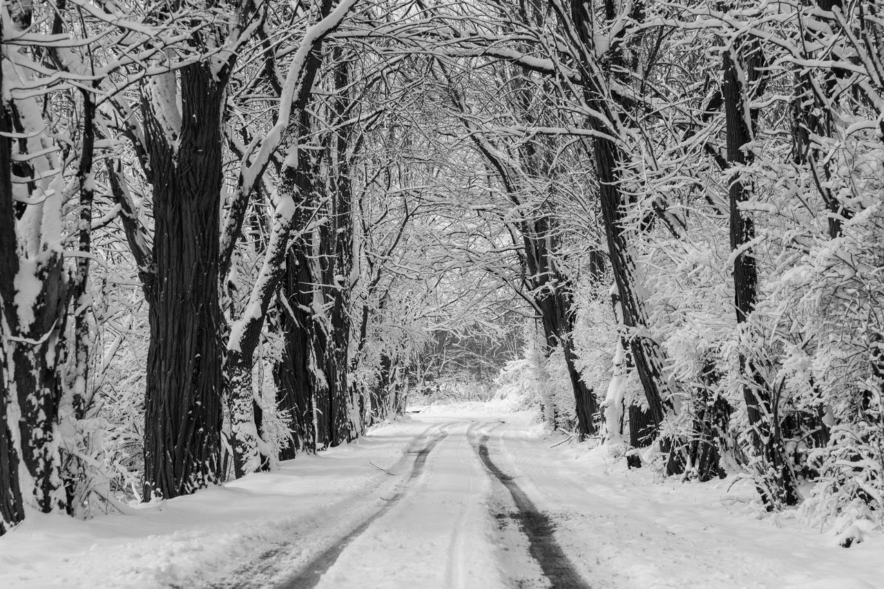 Tree Cold Temperature Snow Winter The Way Forward Weather Nature Tree Trunk Beauty In Nature Forest Road Tranquility Branch Day Outdoors Scenics Tranquil Scene Landscape Snowing