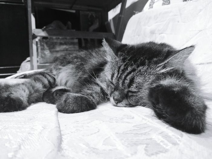 Feel asleep One Animal Pets Indoors  Animal Themes Cat Lying Down Animal Huawei P9 Plus Leica Monochrome