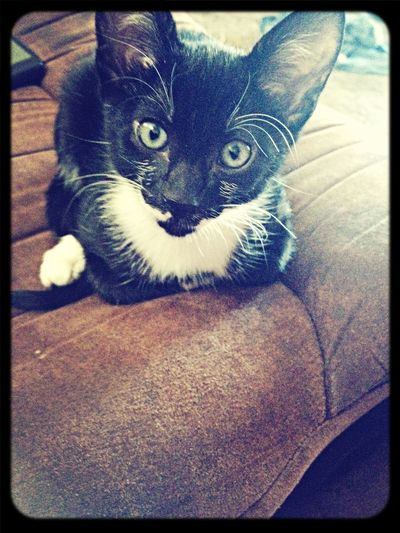 My kitten Sprite ?