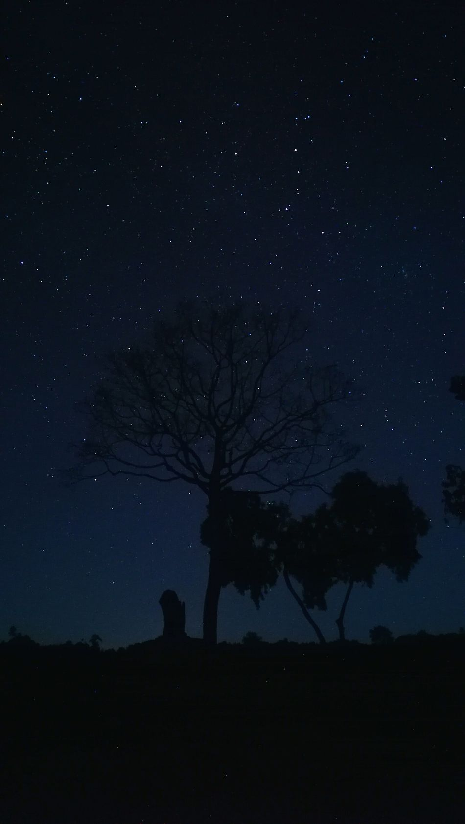Star - Space Night Astronomy Beauty In Nature Tree Space And Astronomy Sky Nature Galaxy Glittering Star Field No People Outdoors Low Angle View Idyllic Scenics Silhouette Constellation Tranquil Scene Tranquility Starry Night Milky Way Milkywaygalaxy Milkywaypudding Cloud - Sky