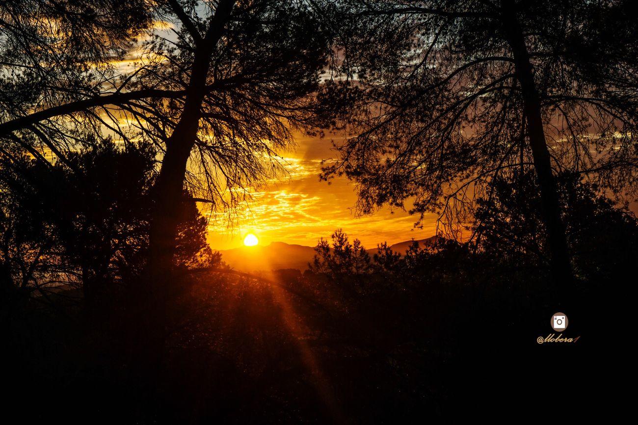 Bon dia! Hello World Enjoying Life SPAIN Illes Balears Mallorca Landscape