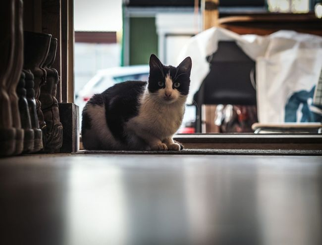 Streetcats Streetcat Cats Cat Feline Pets Olympusomd Blurred Background Point Of View Ground Level View On The Floor Focused Focus On Foreground From My Point Of View Olympus OM-D E-M5 Mk.II Olympus Katzenplatz Insight Indoor Open Door Come In Cats Of EyeEm White Black Blurredbackground